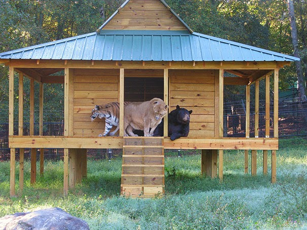 Inusual amistad entre animales de distintas razas