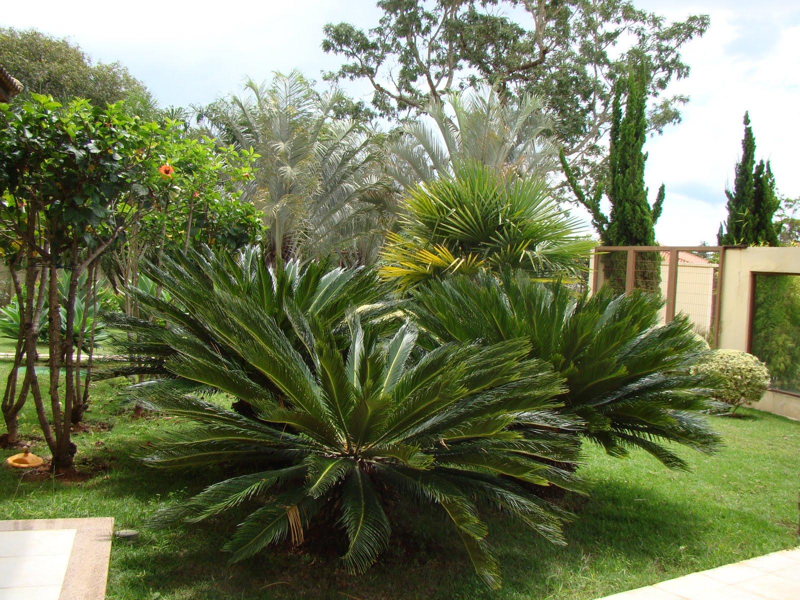 Casa & Flores Plantas que valorizam seu jardim