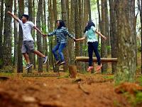 Liburan di Balik Rindang dan Sejuknya Hutan Pinus Jogja