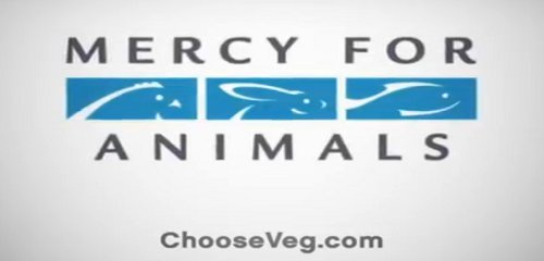 Image of: Vegetarian Diet Mercy For Animals Launches Provegetarian Commercials To Air On Mtv This Dish Is Veg Mercy For Animals Launches Provegetarian Commercials To Air On Mtv