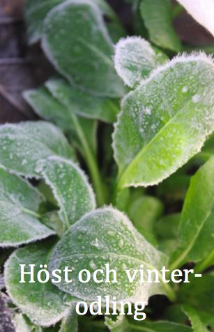 Om att odla under vinterhalvåret