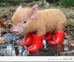 U love style - Image de cochon mignon ...