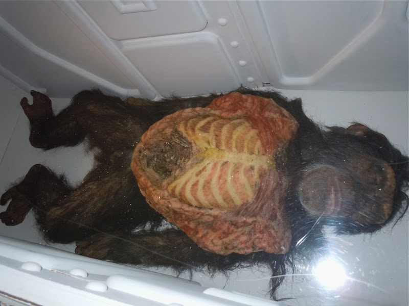 Chimp creature effects 28 Days Later film