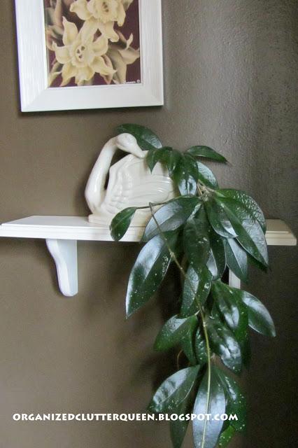 Hoya in a Figural Swan Planter
