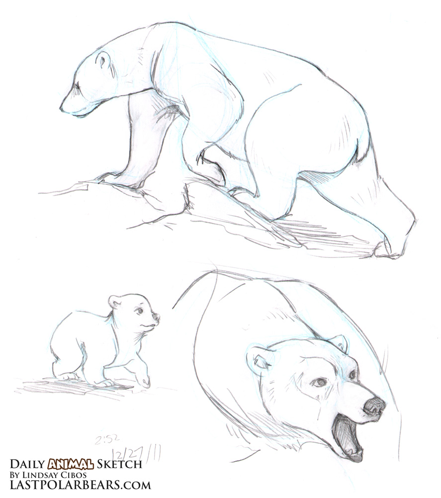Grizzly bear cubs drawing - photo#25