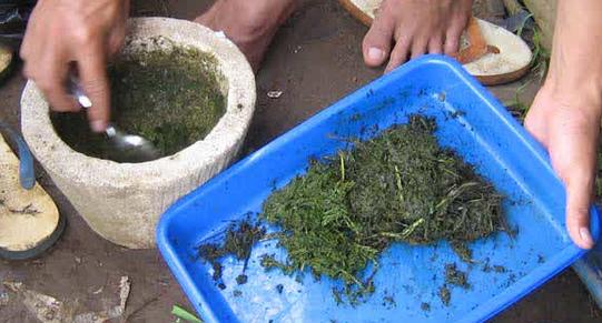 Ramuan Pupuk Organik untuk Pengendalian Hama dan Penyakit Tanaman