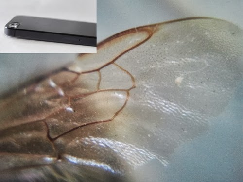01-Insect-Wing-Micro-Phone-Lens-15X-Magnifying-Inventor-Thomas-Larson-Mechanical-Engineering-Kickstarter-www-designstack-co
