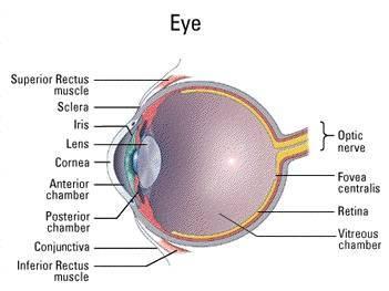 penyakit mata,penyakit mata,penyakit mata ikan,penyakit mata glukoma,penyakit mata pada kucing,penyakit mata ikan di kaki,penyakit mata merah,penyakit mata silinder,penyakit mata katarak,penyakit mata kuning,penyakit mata ikan pada kaki