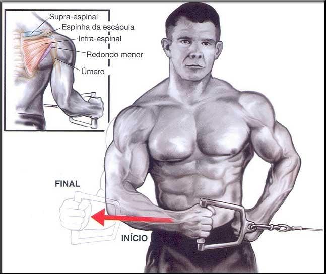 Amado MUSCULAÇÃO, A ARTE DE PUXAR FERRO: Exercícios para Ombros  VQ63
