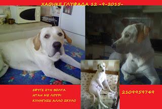 Χάθηκε στις 12-9-2015 στη Γλυφάδα ο σκυλάκος της φωτογραφίας.