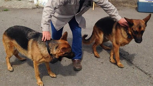 http://www.krem.com/news/slideshows/German-shepherds-armed-with-cell-phones-patrol-Spokane-neighborhood--271309331.html