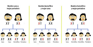 Herencia multifactorial o poligenica