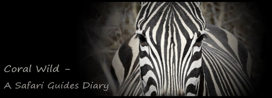 Coral Wild - A Safari Guides Diary