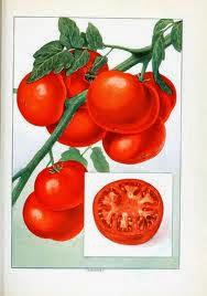direct naar tomatenchutney en inmaken