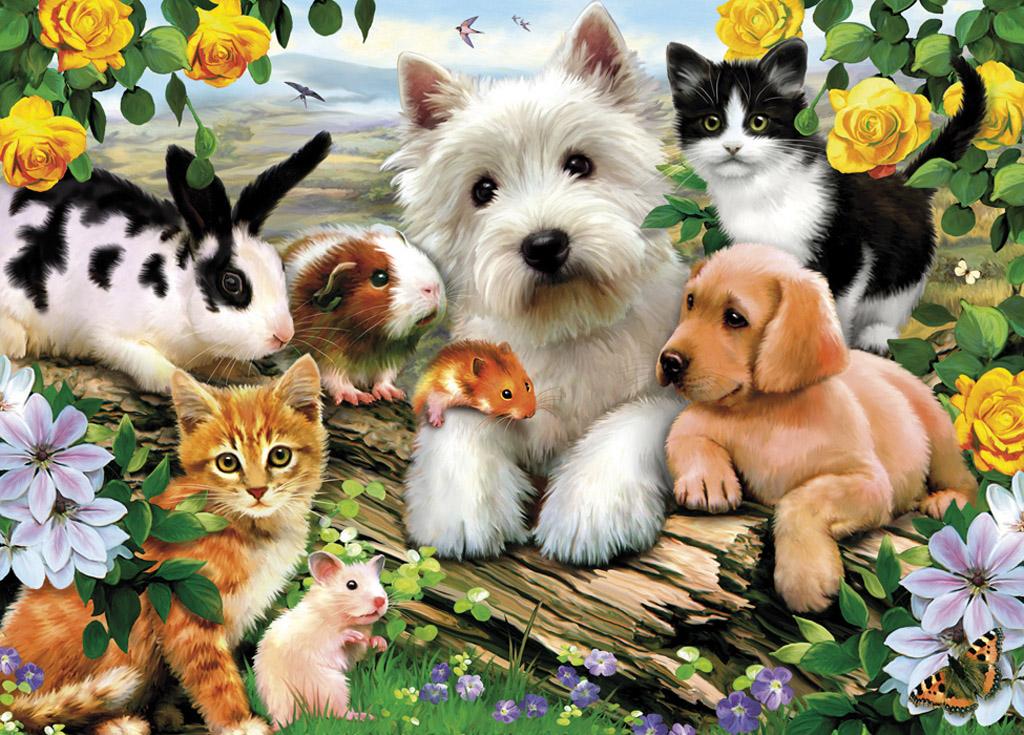 diario animal desde este jueves c rcel a quienes maltraten animales en df. Black Bedroom Furniture Sets. Home Design Ideas