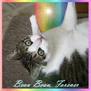 RIP Beau Beau