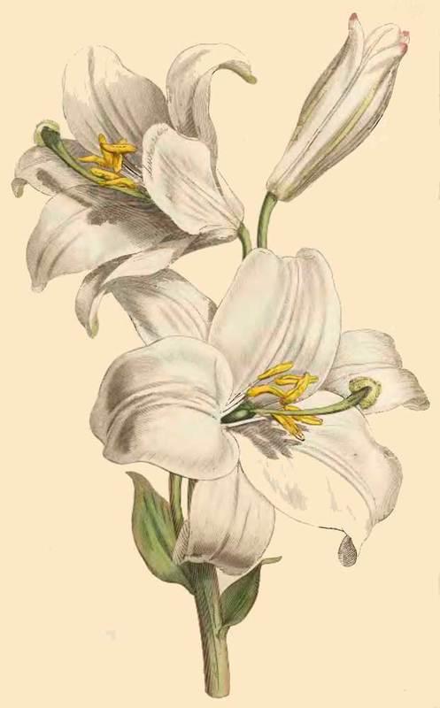 Medieval Bride Medieval Flowers