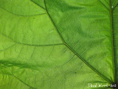 Nature Macro Photo