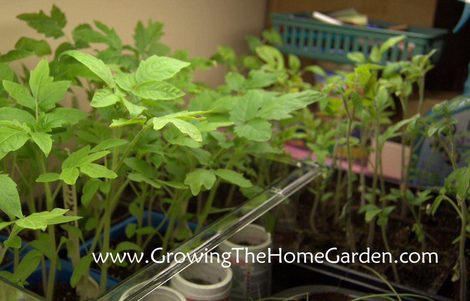 how to break up soil around seedlings