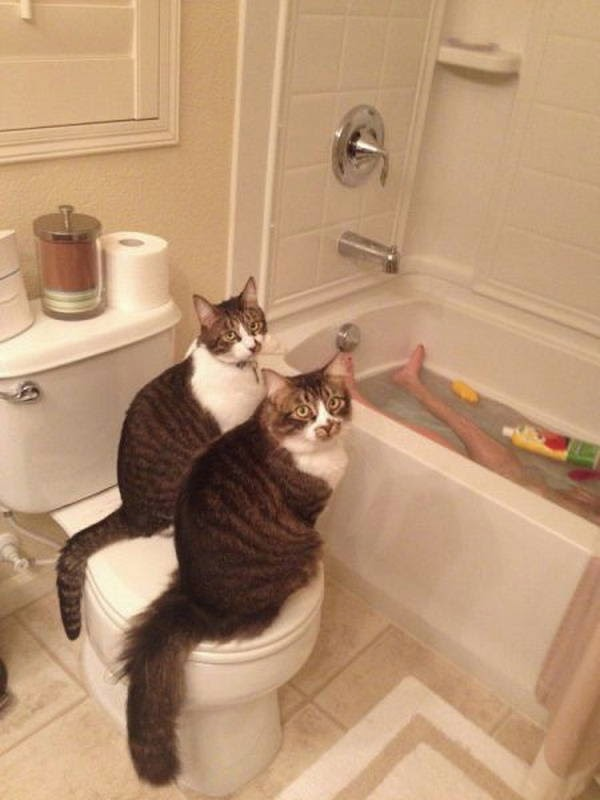 Funny cats - part 130, cat photo, cute cat pictures