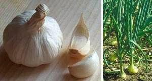 Rimedi naturali usi dell'aglio