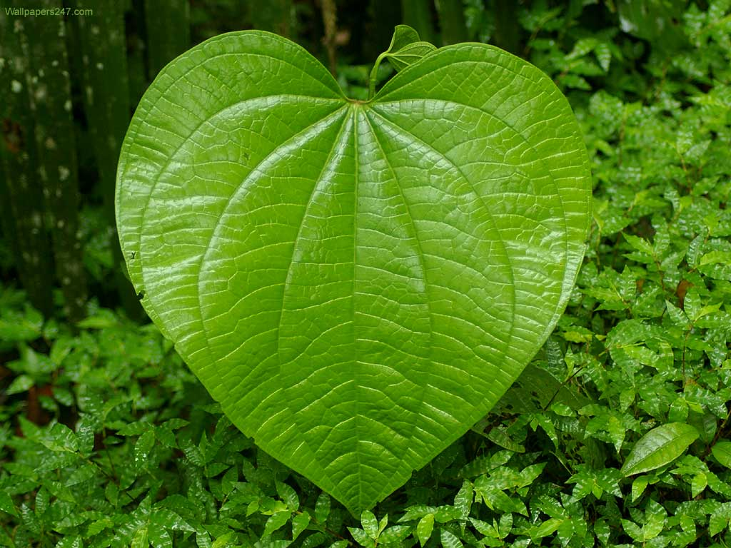 Lovely best plant leaf pic