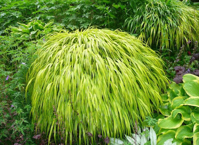 The 10 best perennials for shade for Can ornamental grasses grow in shade
