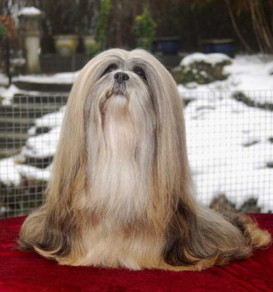 Funny looking dog breeds ~ unique animal wallpapers Unique Looking Dog Breeds