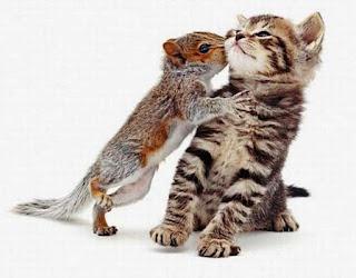Gambar Wallpaper Kucing Lucu Banget 200010