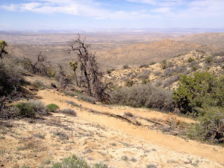 View north from Panorama Loop Trail into Black Rock Canyon, Joshua Tree National Park