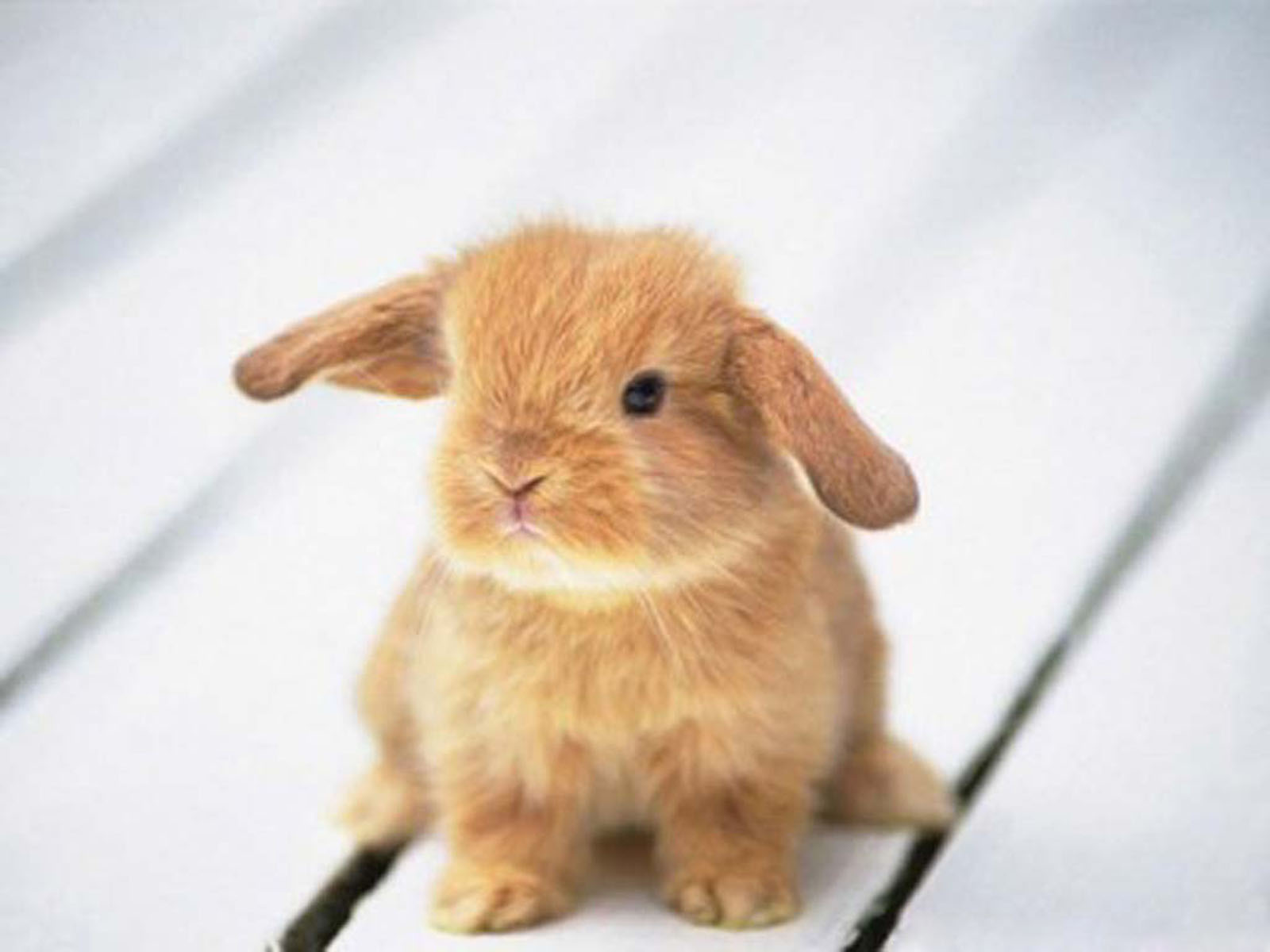 wallpapers funny rabbit wallpapers
