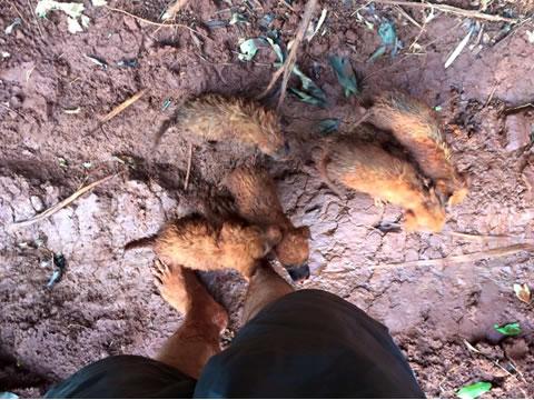 Perritos rescatados en la selva 1