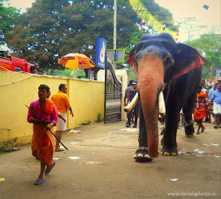 Pooram Images - Kerala Photos