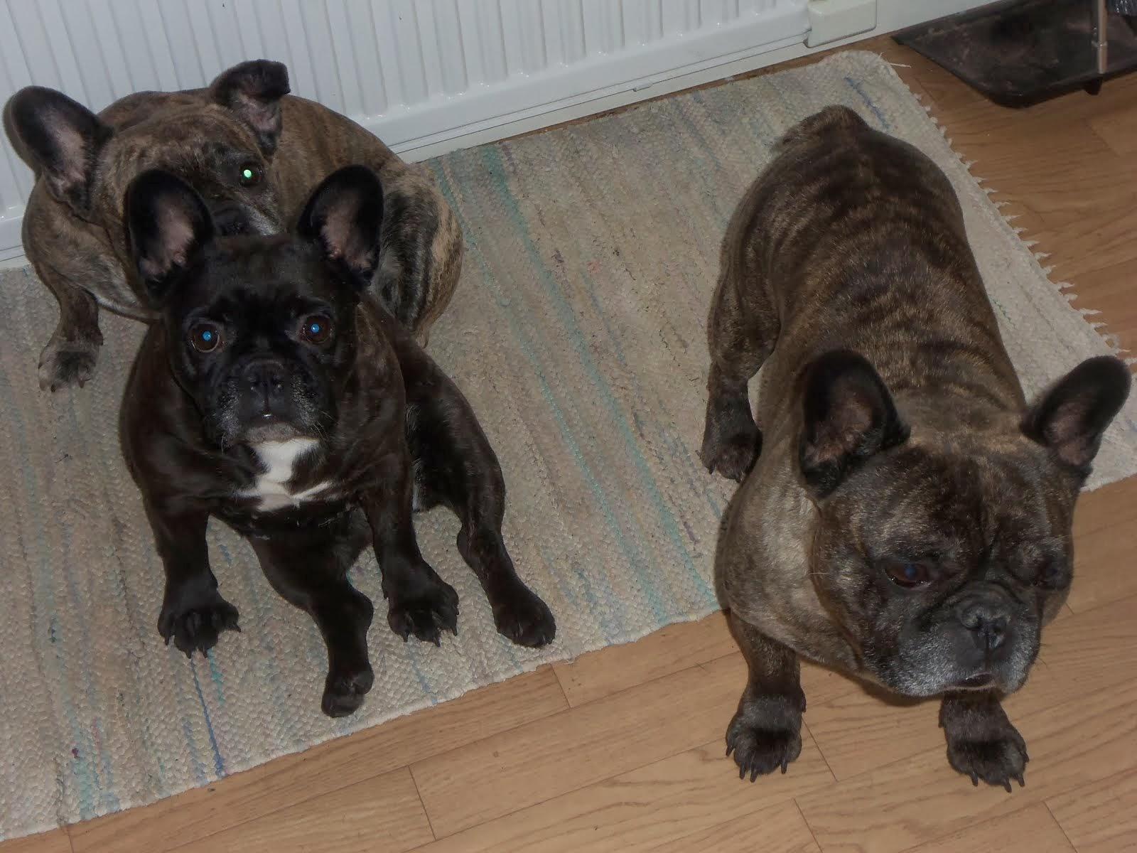 mina två otroligt söta hundar