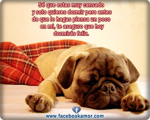 Imágenes divertidas de lindo perro durmiendo - Imagenes de Amor ... Feliz Dia Mama