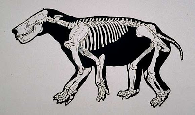 Titanoides skeleton
