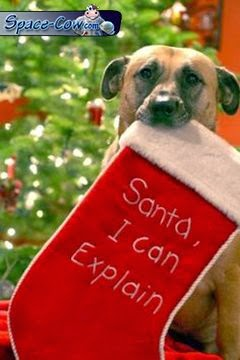 funny Santa dog picture