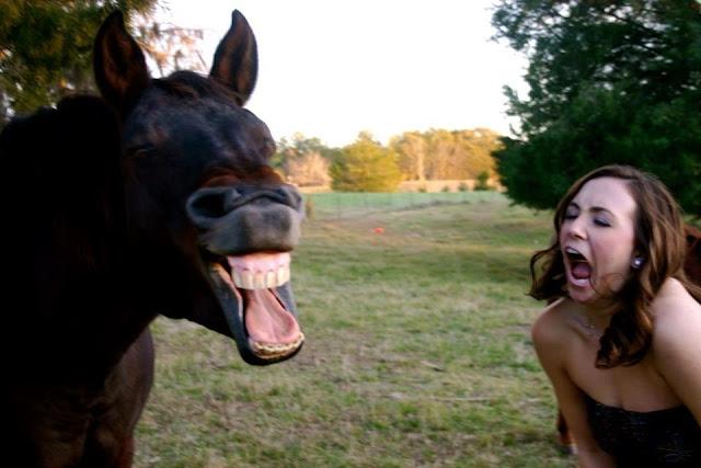 funny animal photos, animals photos, photos of funny animals, funny animals