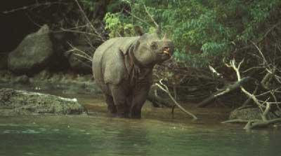 Ujung Kulon, Pertama Kalinya Indonesia Punya Taman Nasional