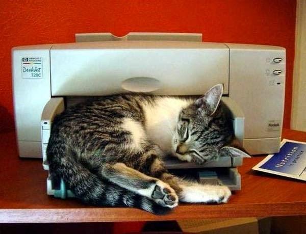 gato durmiendo en impresora multifuncional