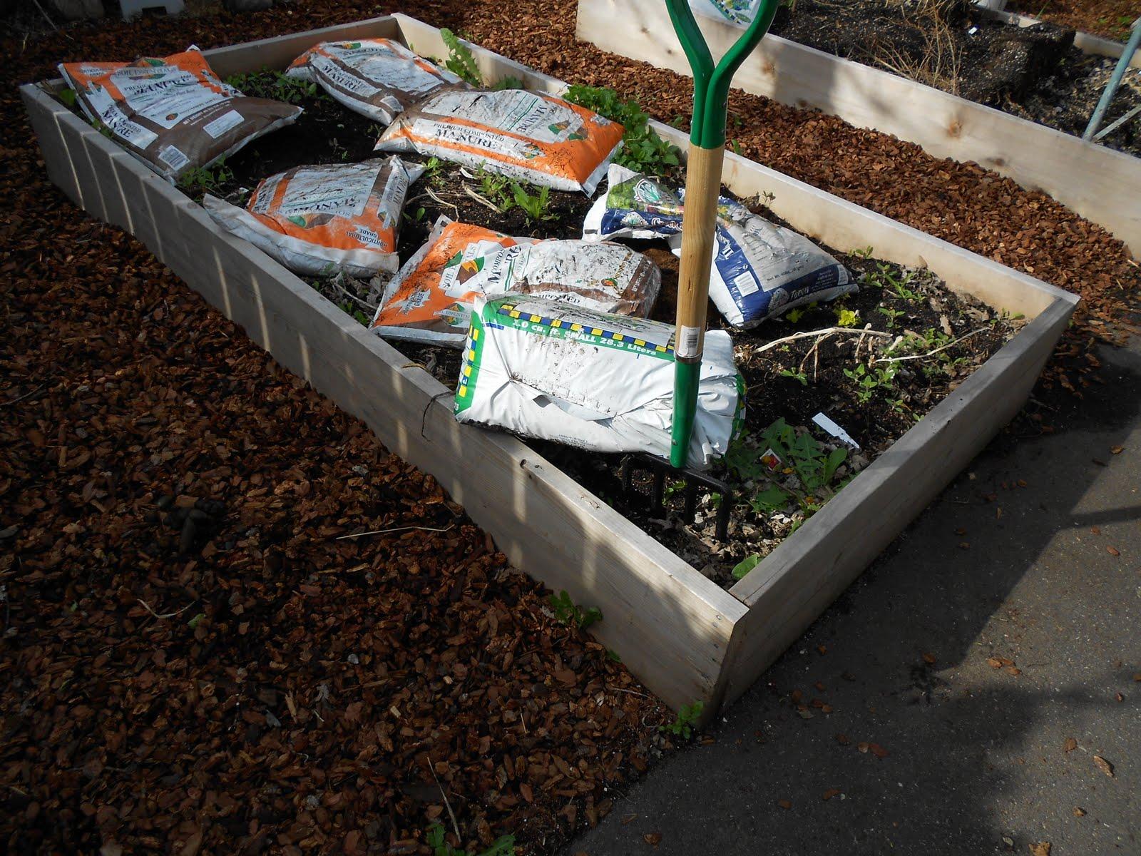 Arts and flowers mn planting a vegetable garden - Best vegetable garden soil amendments ...