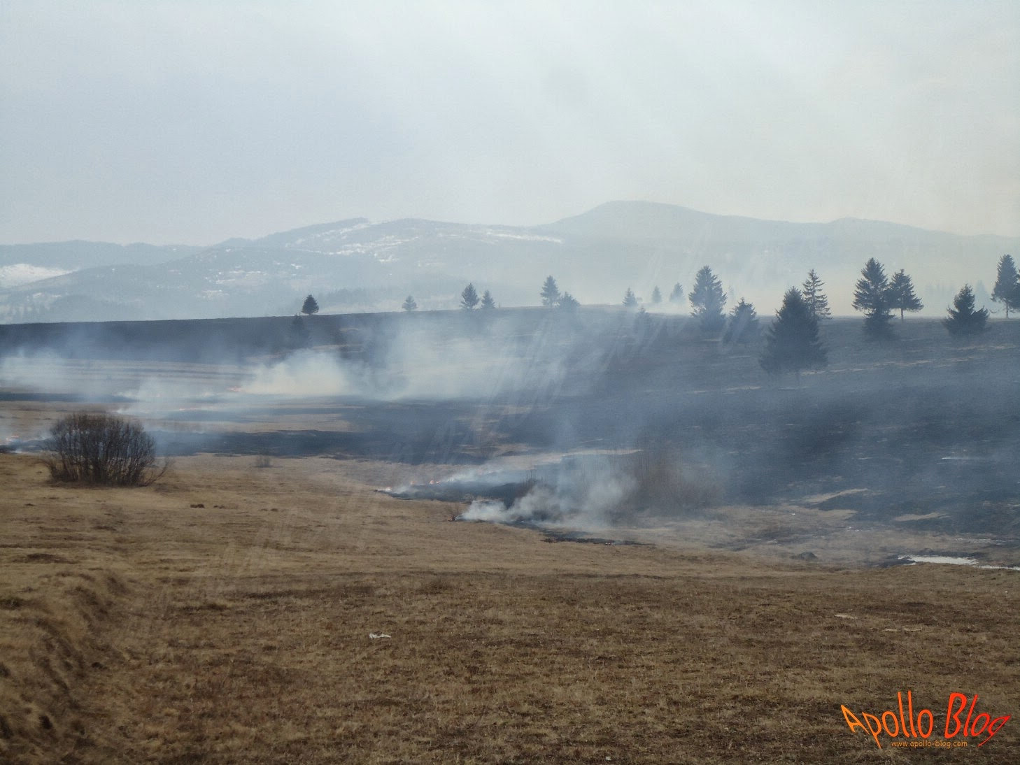 Incendiu de vegetatie Filpea