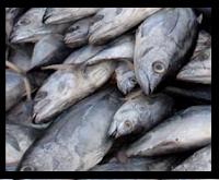 Πώς αφαιρούμε τις μυρωδιές των χεριών μετά το ψάρεμα;