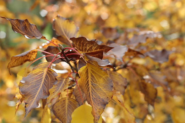 Just For Daisy:: Autumn Love