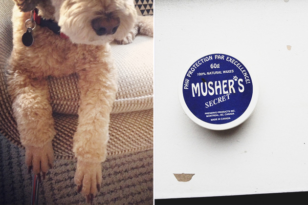 musher's dog wax