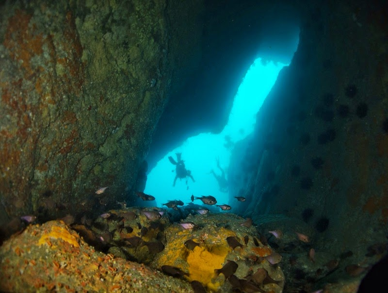 """<a href=""""http://mataram.info/things-to-do-in-bali/visitindonesia-banda-marine-life-the-paradise-of-diving-topographic-point-inward-fundamental-maluku/"""">Indonesia</a> best time to visit :; Into The Big Eyes Lair, Underwater Wood Together With Cave Inward Bay Of Islands, Nz"""