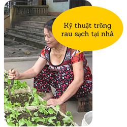 https://sites.google.com/site/tuvantrongrausach/ky-thuat-trong-rau-sach-tai-nha