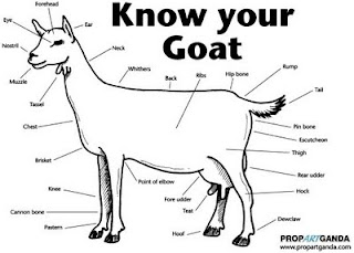Vincent De roeck know your goat Biology for beginners