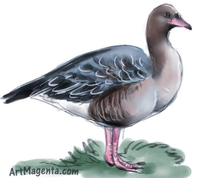 Pink-footed goose sketch painting. Bird art drawing by illustrator Artmagenta.