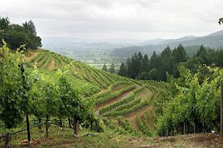 Lindas colinas en Napa Valley